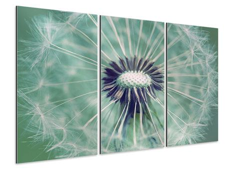 XXL Aluminiumbild 3-teilig Close Up Pusteblume