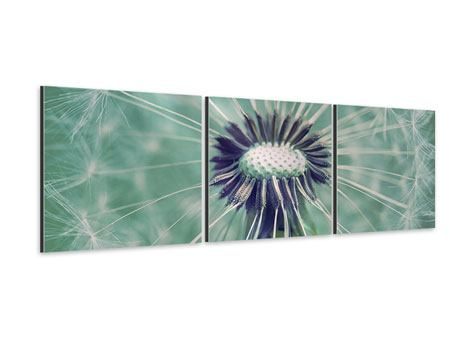 Panorama XXL Aluminiumbild 3-teilig Close Up Pusteblume