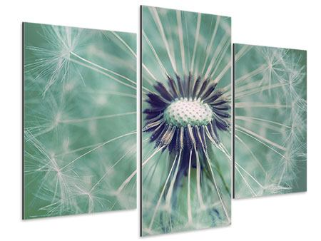 XXL Aluminiumbild 3-teilig modern Close Up Pusteblume