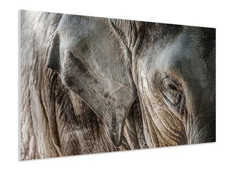XXL Stoffbild Close Up Elefant